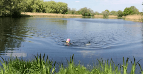 Open Water Swim Session @ Lenches Lakes | England | United Kingdom